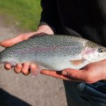 Tuki Daylesford Trout Fishing