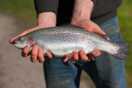 Tuki Ballarat Trout Fishing